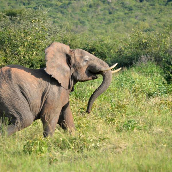 4 Days Tanzania Safari