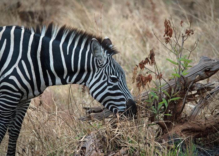 5 Days Northern Safari
