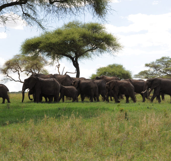Epic Tanzania Safari
